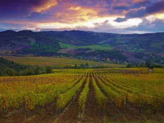 обои для рабочего стола: Осень на виноградниках Тосканы. Италия