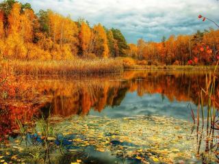 обои для рабочего стола: Осеннее лесное  озеро