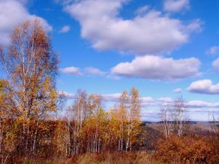 обои Акварель про осень фото