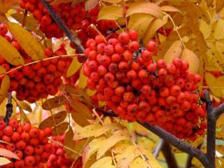 обои Осенние радости фото