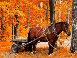 обои Осенний экипаж фото