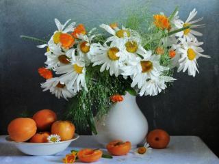 обои Ромашки и абрикосы фото