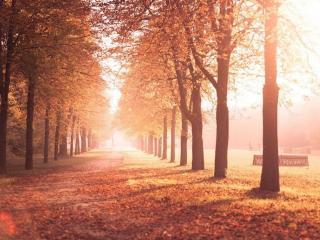 обои Солнечная осень фото