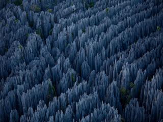 обои Сплетения лесных каньонов фото