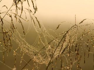 обои для рабочего стола: Осенний дождь и паутинка