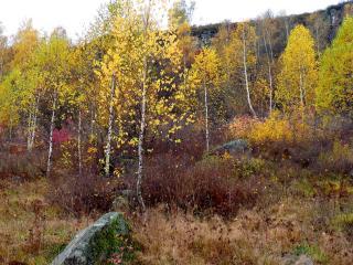 обои для рабочего стола: Осенняя сопка