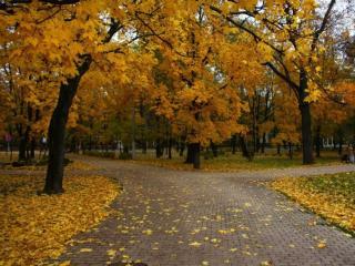 обои для рабочего стола: Осень в парке Сокольники