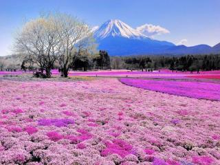 обои для рабочего стола: Вулкан и цветущая долина