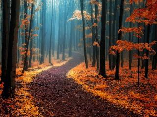 обои Осенние сумерки фото