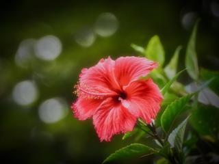 обои Красный цветок распустился фото