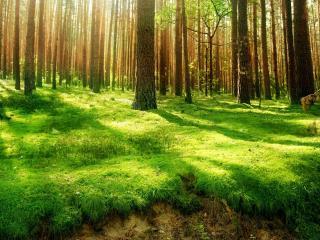 обои для рабочего стола: Солнечная поляна в лесу