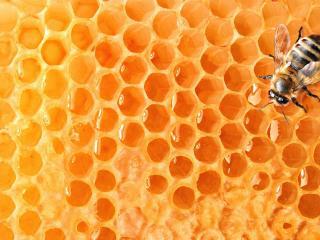 обои Пчела заполняет соты фото