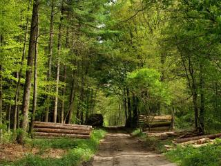 обои Лесная дорога с бревнами фото