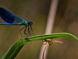 обои Прятки стрекозы и муравья фото
