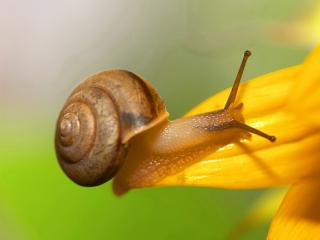 обои Улитка на желтом цветке фото