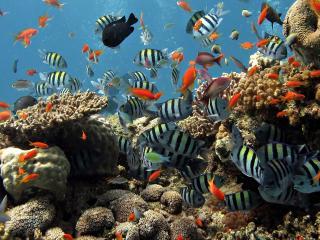 обои Красоты кораллового рифа фото