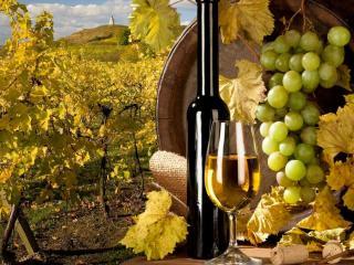 обои Виноградное белое вино фото