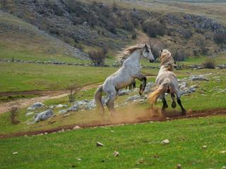 обои Дикие лошади Боснии и Герцоговины фото
