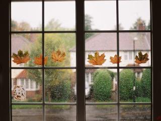обои для рабочего стола: Осенний дождь за окном