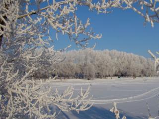 обои Заснеженное поле и лес фото
