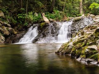 обои Лесной ручей фото