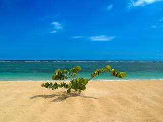 обои Зеленый индивидуум на пляже фото