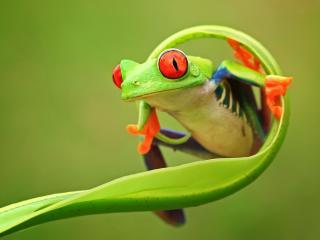 обои Лягушки фото