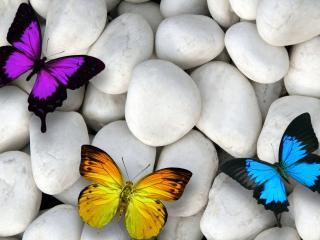 обои Разноцветные бабочки на белых камнях фото