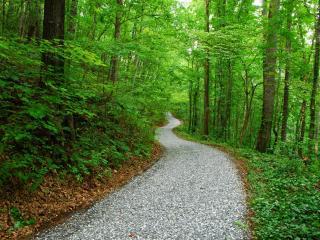 обои Извилистая дорожка в лесу фото