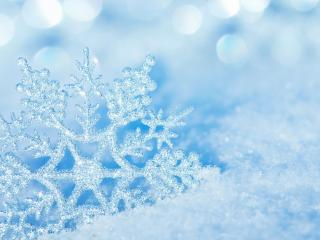 обои Снежинка из природного серебра фото
