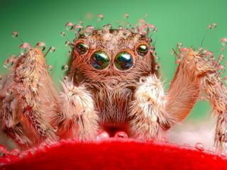 обои Мокрый мохнатый паук фото