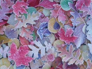 обои Осенние листья покрытые инеем фото