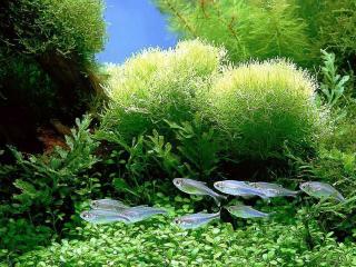 обои Обитатели аквариума фото