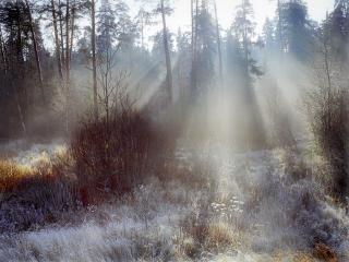 обои для рабочего стола: Первые заморозки в лесу