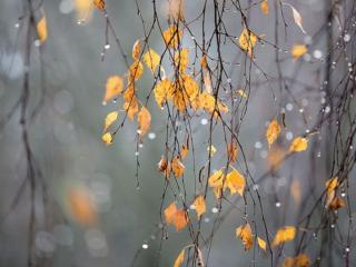 обои Последний дождь фото