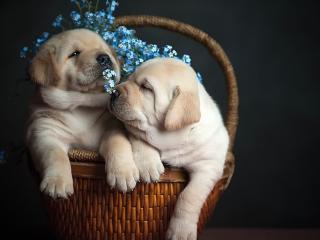 обои Милая парочка в корзинке фото