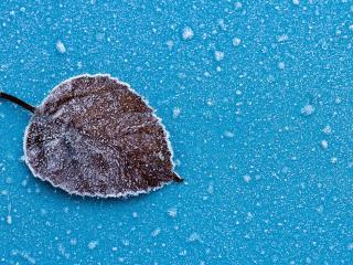 обои Замерзший листок на льду фото