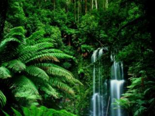 обои для рабочего стола: Водопад в густых тропиках