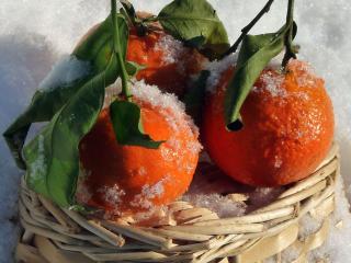 обои для рабочего стола: Морозные апельсины