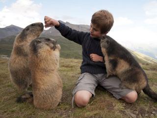 обои Дружба мальчика с сурками фото