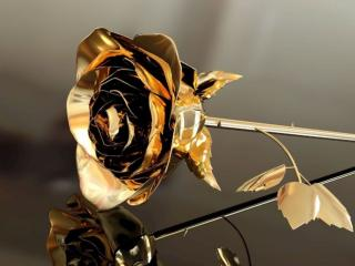 обои Золотая роза фото