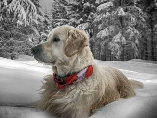 обои Лорд в снегу фото