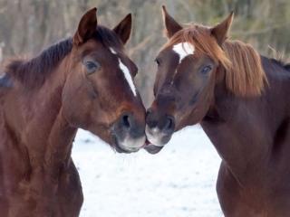 обои Он,   она и поцелуй фото