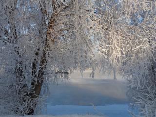 обои Свет зимы фото