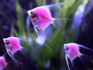 обои Светящиеся рыбы фото