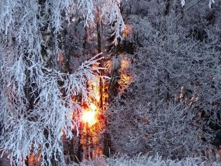 обои Солнце светит сквозь зимние ветви фото