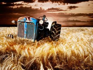 обои Брошенный ржавый трактор на пшеничном поле фото