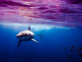 обои Грозные обитатели морских глубин фото