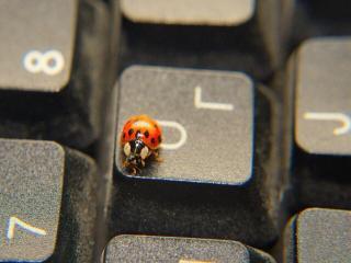 обои для рабочего стола: Божья коровка на клавише