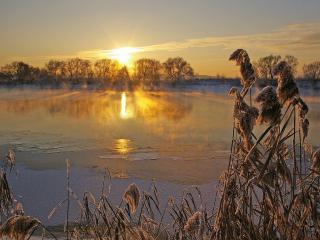 обои Мороз и солнца лучи золотые фото